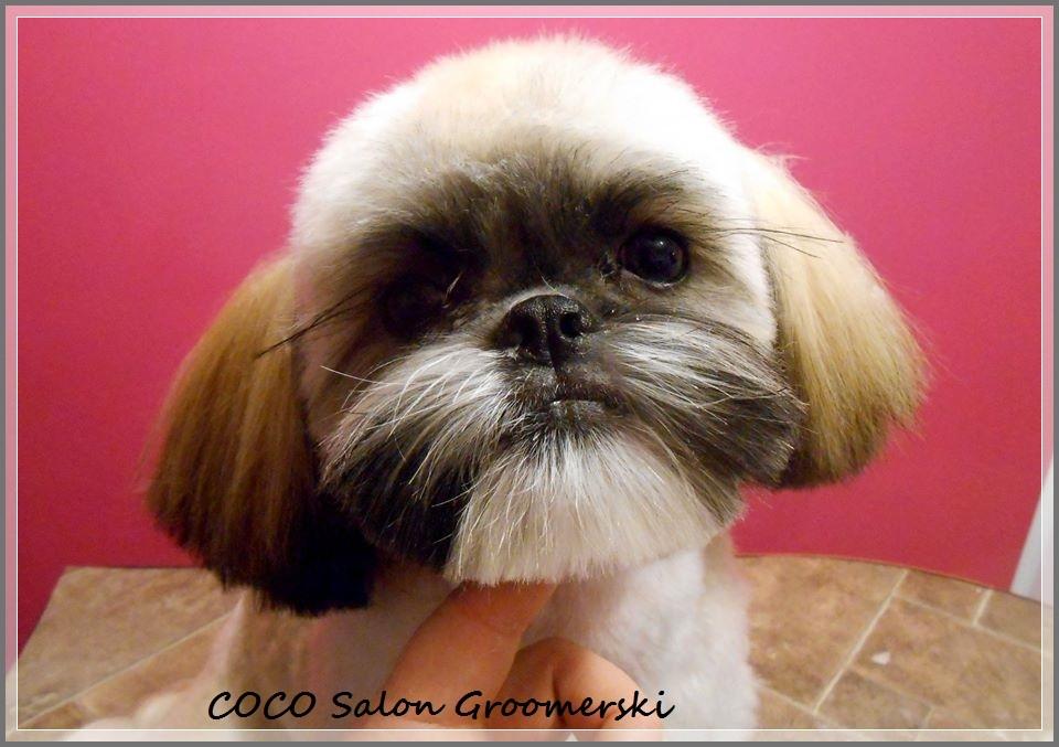 Fryzury Dla Psow Wroclaw Coco Salon Groomerski