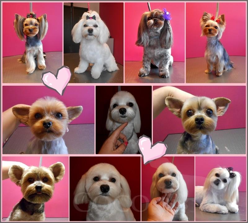 psi fryzjer wrocław stylizacje psów wroclaw psi stylista
