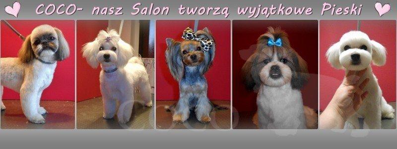 Coco Salon Groomerski
