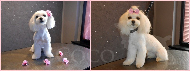 coco wroclaw Stylizacje psów