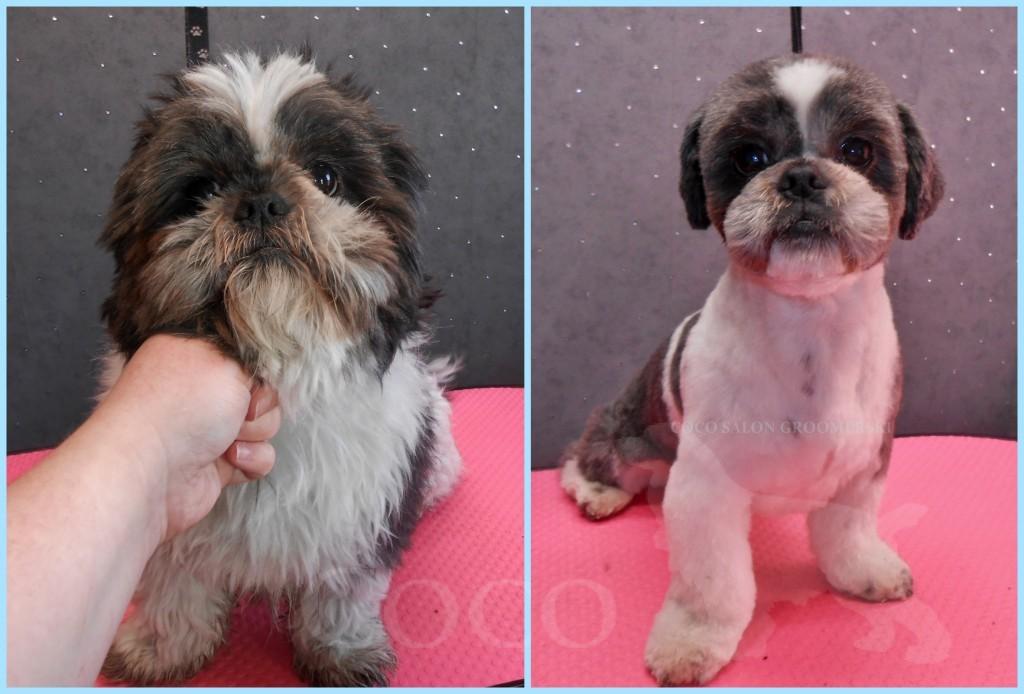 strzyzenie psow salon groomingu wroclaw